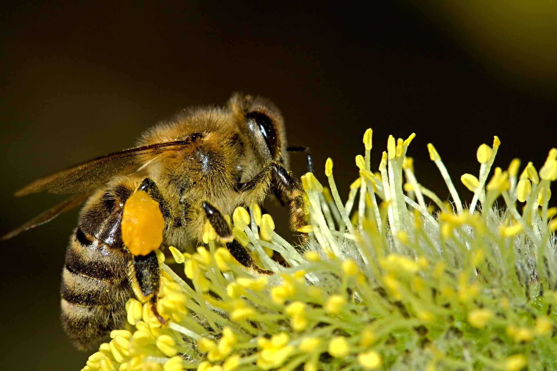 El experimento permitirá a los biólogos comprender mejor el comportamiento de las especies involucradas. (Foto Prensa Libre: Pixabay)