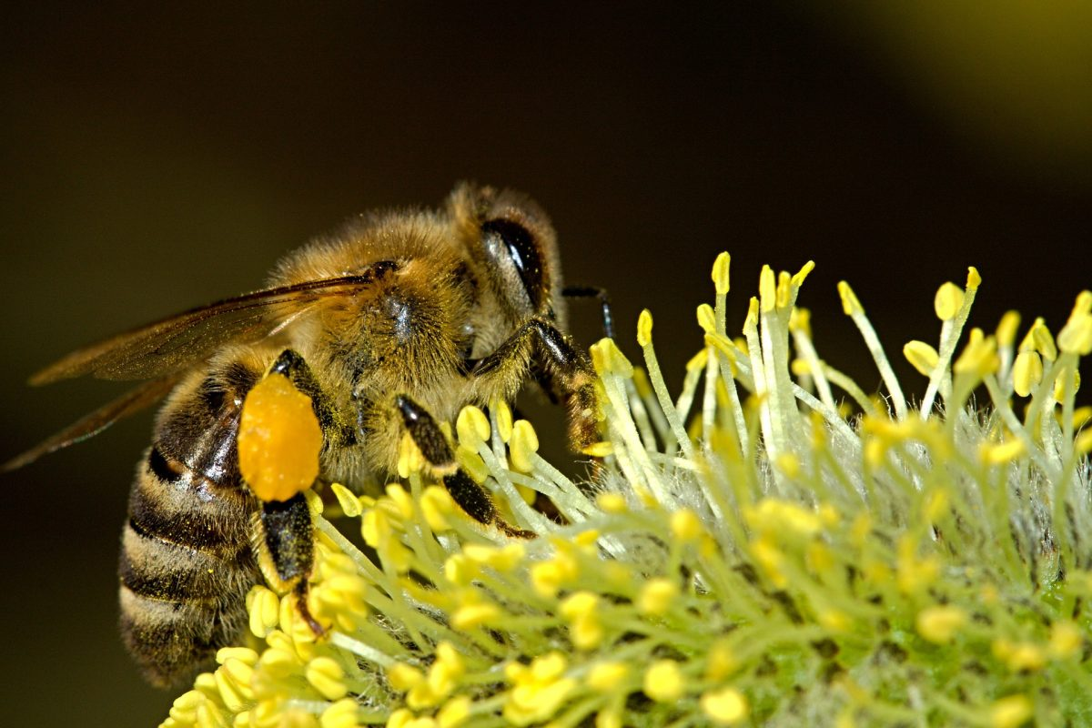 Científicos logran que abejas y peces se comuniquen entre sí mediante robots