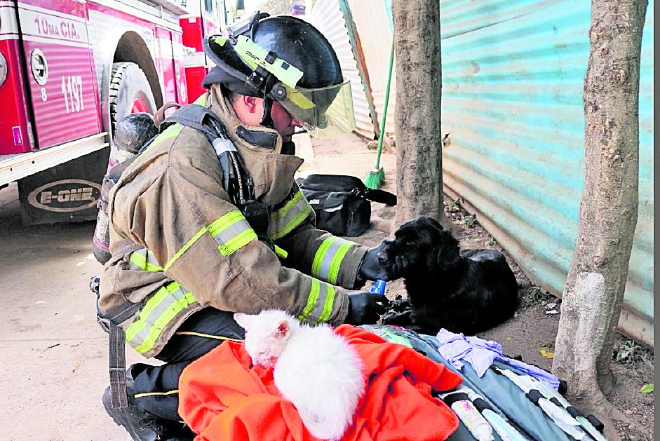 El protocolo contempla pasos para la mejor atención de animales rescatados en desastres naturales.( Foto Prensa Libre: Hemeroteca PL)