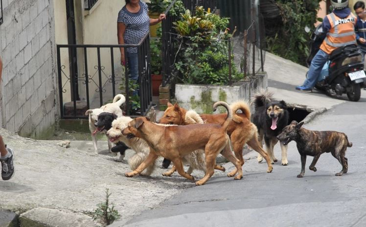 Se presume que los perros que han sido destazados para la venta de su carne son los que deambulan sin dueño por las calles. (Foto Prensa Libre: Hemeroteca PL)