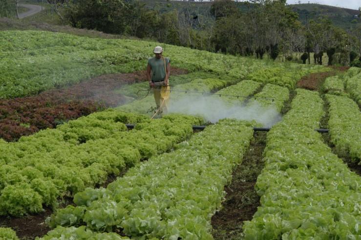 Los fabricantes de plaguicidas tienen hasta diciembre del 2020 para registrar sus nuevas etiquetas. (Foto, Prensa Libre: Hemeroteca PL).