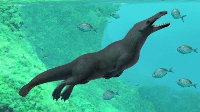 La recién descubierta ballena vivió hace aproximadamente 43 millones de años. REUTERS