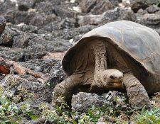 Los animales no están a salvo de la cacería humana: en el cielo las aves, en la tierra las tortugas y en el mar las focas. (Foto Prensa Libre: Hemeroteca PL)