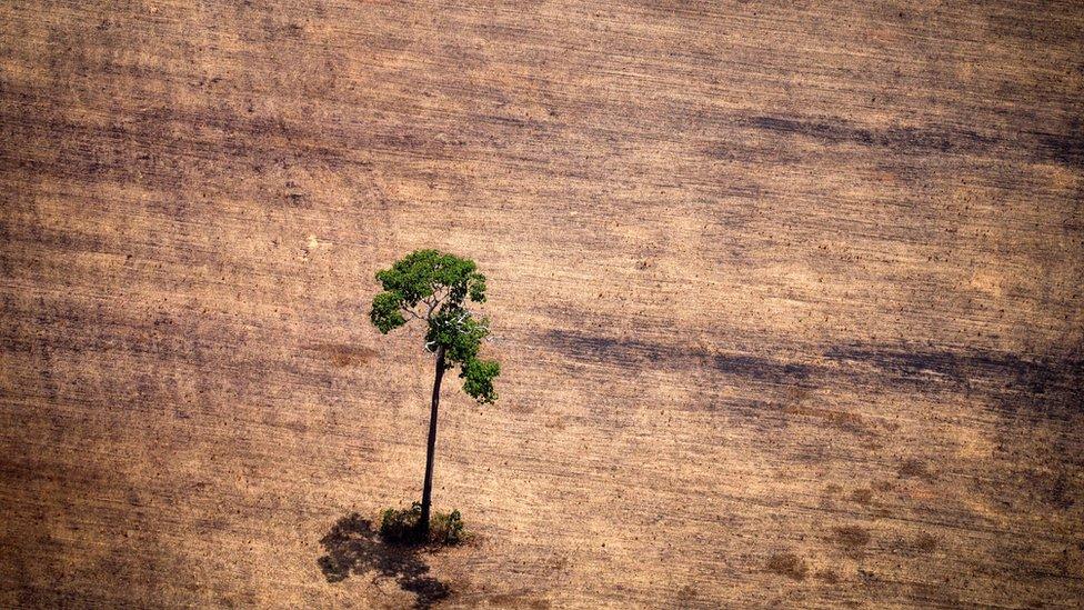 La cuenca del río Amazonas es una de las zonas más afectadas del mundo.