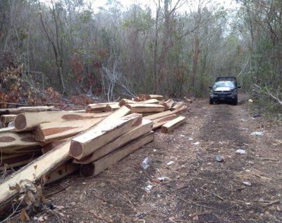 Tala ilegal en selva petenera continúa pese a denuncias