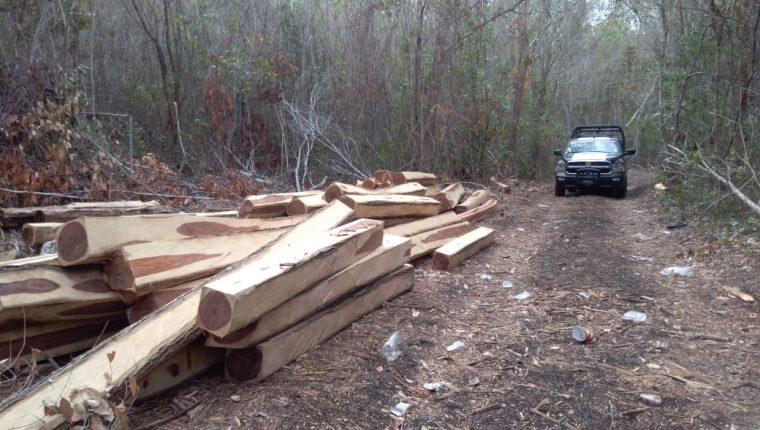 La tala ilegal se mantiene aunque activistas de grupos ecologistas han denunciado retieradamente los actos ilegales. (Foto Prensa Libre: cortesía)