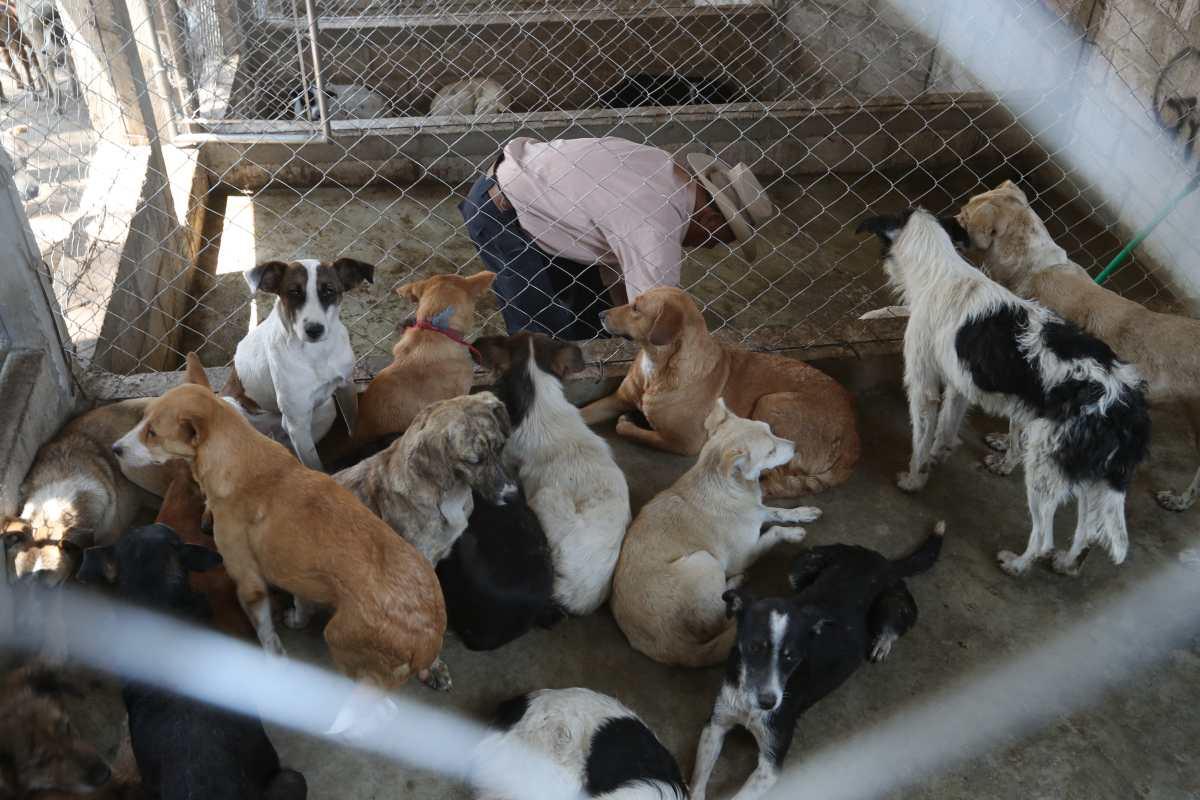 Cómo San Juan Ostuncalco sacó a todos los perros de la calle (sin matarlos)