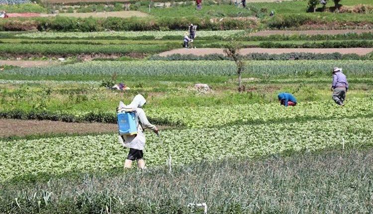 En las diferentes actividades económicas, las cámaras empresariales impulsan una agenda para cumplir las metas del milenio. (Foto, Prensa Libre: Hemeroteca PL).