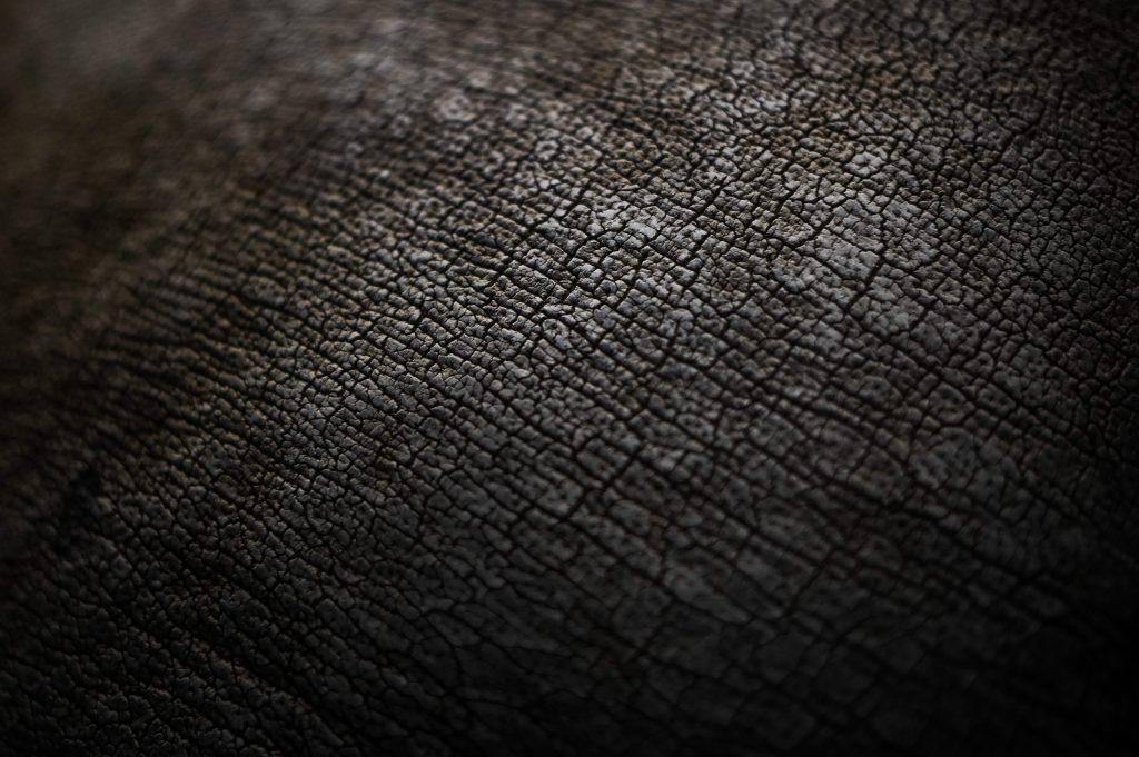 Los rinocerontes son hervíboros y su promedio de vida es de 60 años, la piel de estos animales es gruesa pero sensible. Foto Prensa Libre: AFP