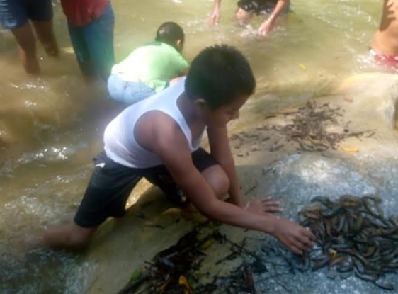 Niños se reúnen en el río Las Lajas para juntar a los animales muertos. (Foto Prensa Libre: Mario Morales).