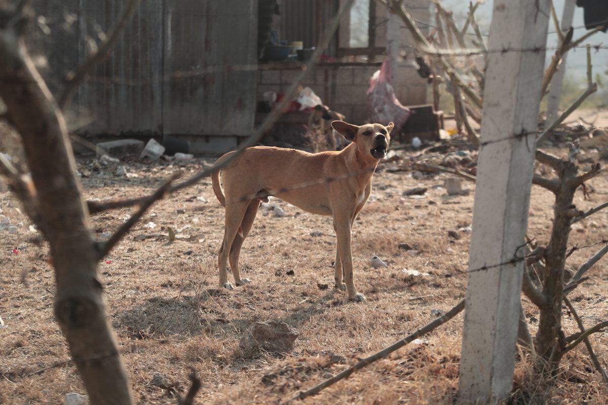 Continúan hallazgos de restos de perros en el área metropolitana
