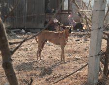 El Ministerio de Salud advierte de severas multas a quien comercialice carne de perro. (Foto Prensa Libre: Juan Diego González)