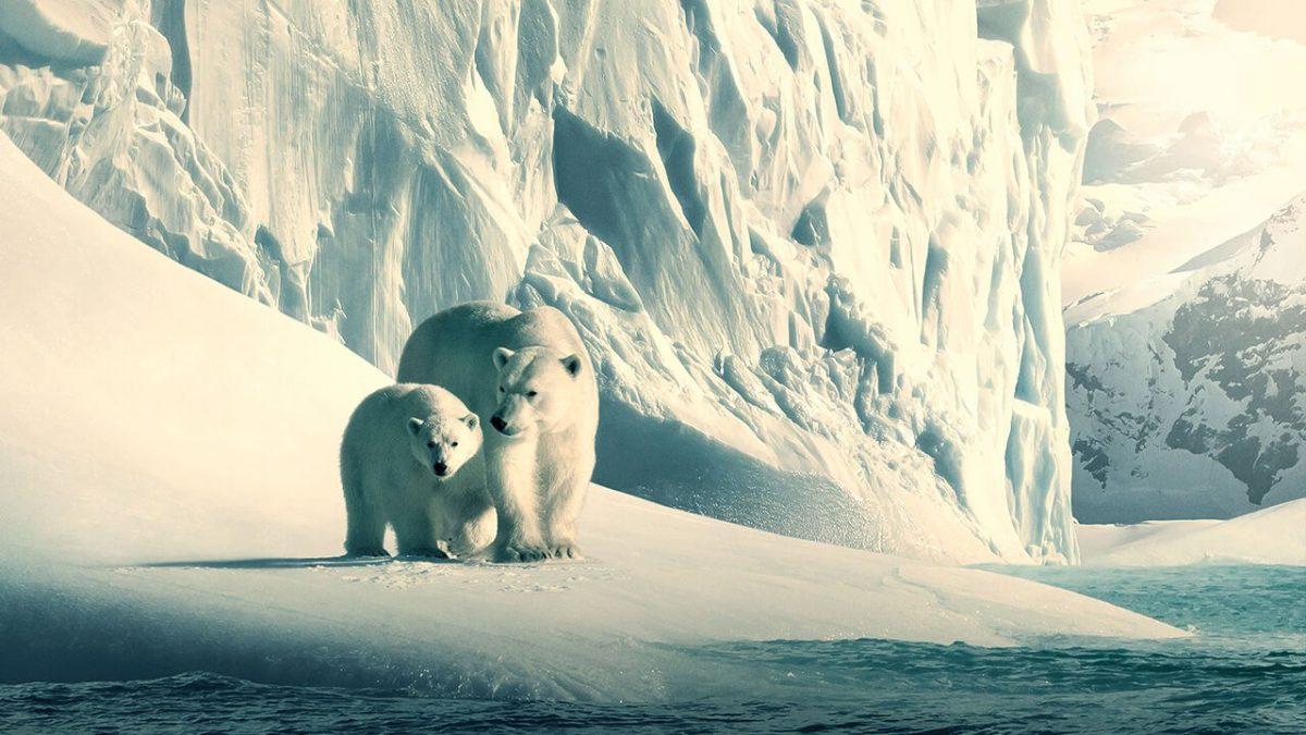 Our Planet: la apuesta de Netflix para hacer un llamado a la preservación del planeta