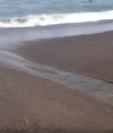 Imagen muestra la contaminación en un área de la playa de Monterrico, Taxisco, Santa Rosa. (Foto Prensa Libre: Imagen tomada de video de Guatevisión).