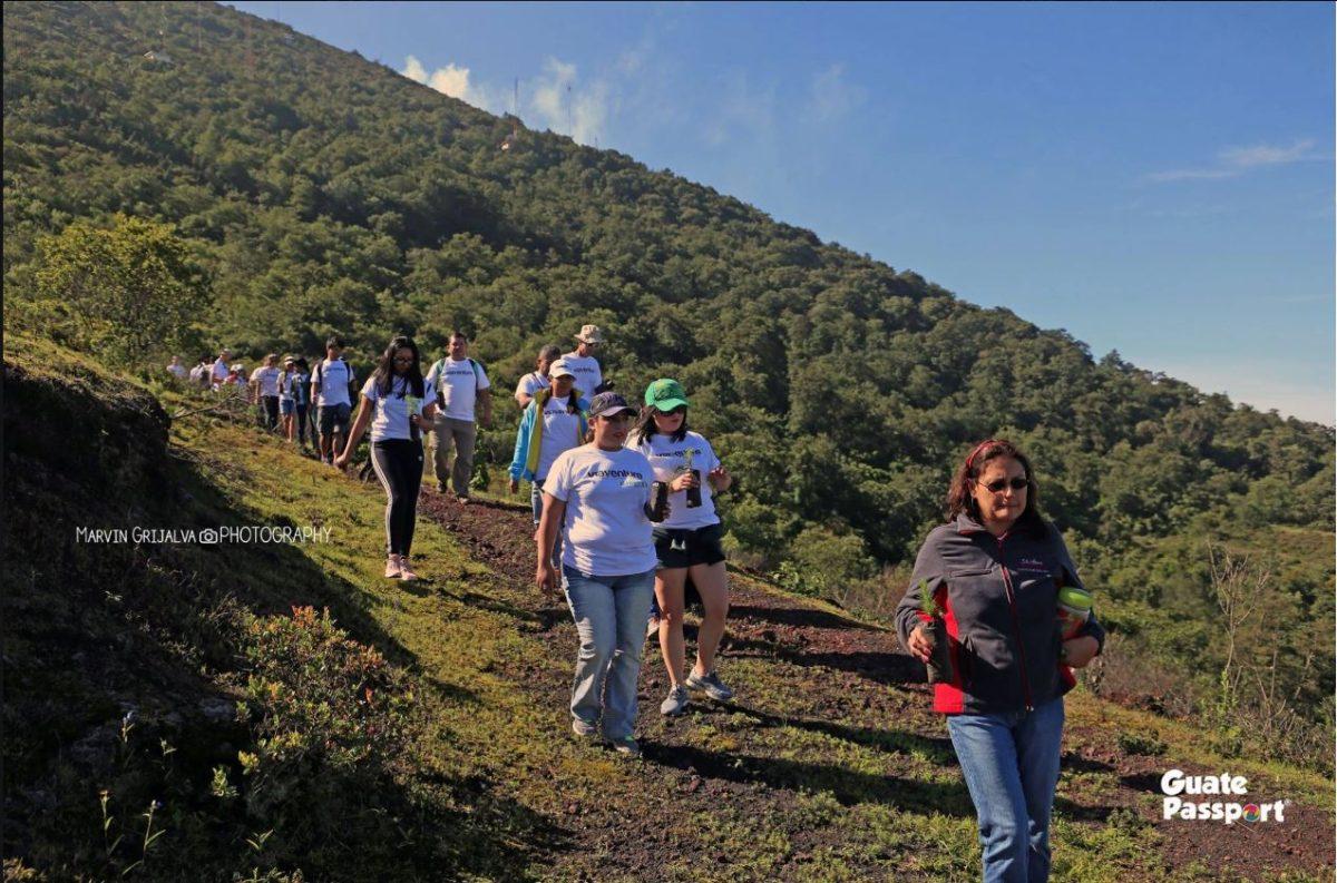 Esto puede hacer si desea colaborar con la reforestación del Parque Nacional Pacaya