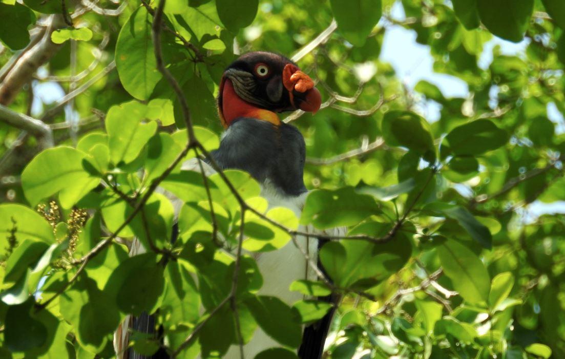 Estas son las riquezas naturales que viven en la selva petenera y que contribuyen con el equilibrio del planeta