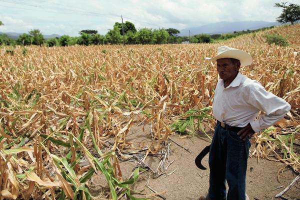 La sequía del año pasado afectó a unas 300 mil familias solo en Guatemala.  (Foto Prensa Libre: Hemeroteca PL)