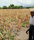 Sumado a un descenso de las inversiones extranjeras y pública la sequía ha agravado la pobreza puesto que las cosechas ya no se producen igual.  (Foto Prensa Libre: Hemeroteca PL)