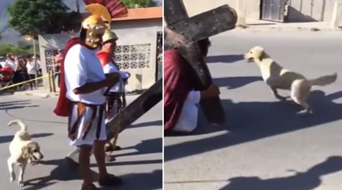 Perro sale a defender a Jesucristo durante viacrucis