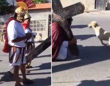 La acción de un perro al defender a Jesús de los azotes que recibía de los soldados romanos conmueve en redes sociales. Foto Prensa Libre, tomada de Facebook