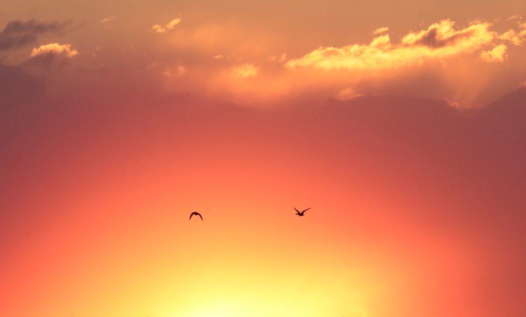 Gansos salvajes vuelan sobre la ciudad de Kologriv, región de Kostroma, Rusia. Foto Prensa Libre: EFE