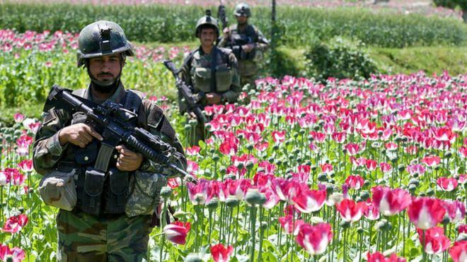 Soldados pasan por un cultivo de flores de amapola en Afganistán. ALAMY