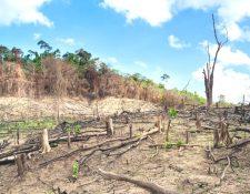 La deforestación en Filipinas.