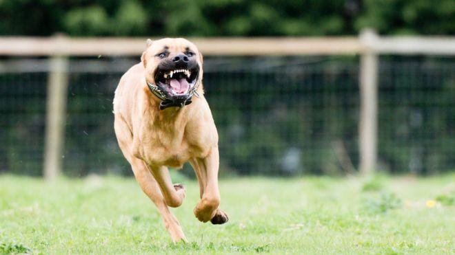 Las mordeduras de perros pueden causar significativas lesiones físicas y psicológicas. GETTY IMAGES