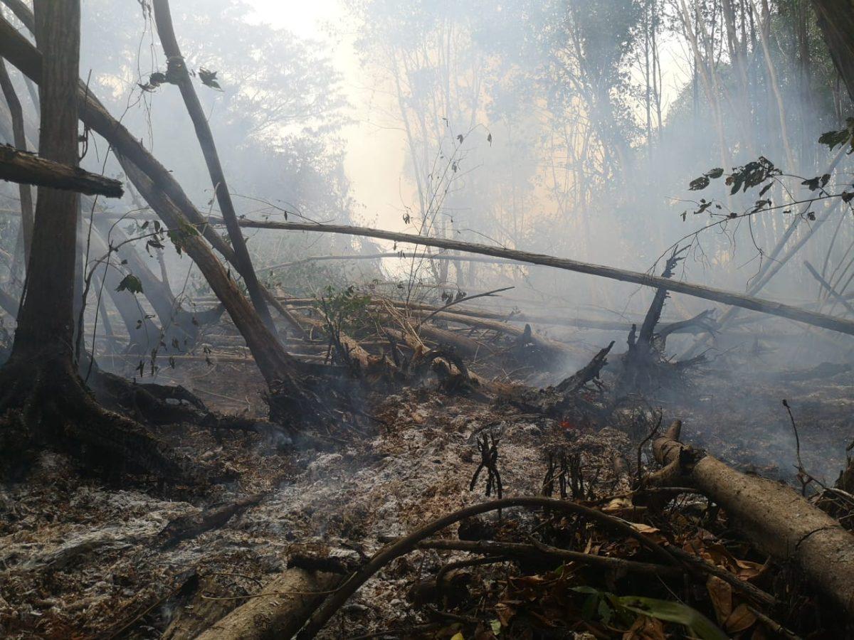 Bosque de mangle dañado por incendio en El Manchón Guamuchal necesitará 20 años para regenerarse
