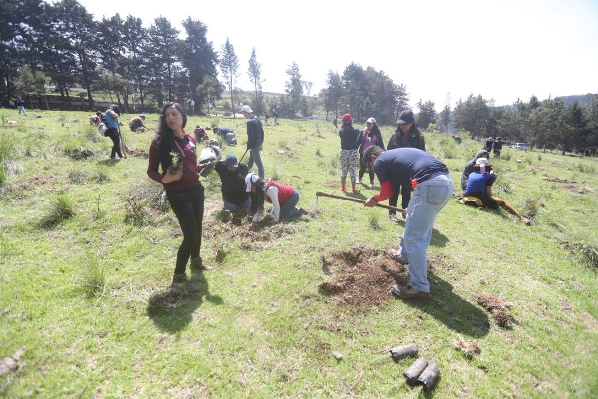 Estudiantes y catedráticos del Cunoc planean sembrar 15 mil árboles este año