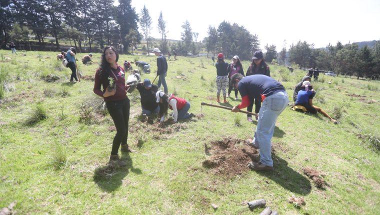 Universitarios ayudan a recuperar bosques afectados por incendios forestales y tala de árboles. (Foto Prensa Libre: María Longo)