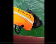 Momento en el que el mono aullador es rescatado en el Lago Petén Itzá. (Video Prensa Libre: Cortesía Jesús Acaham Medina).
