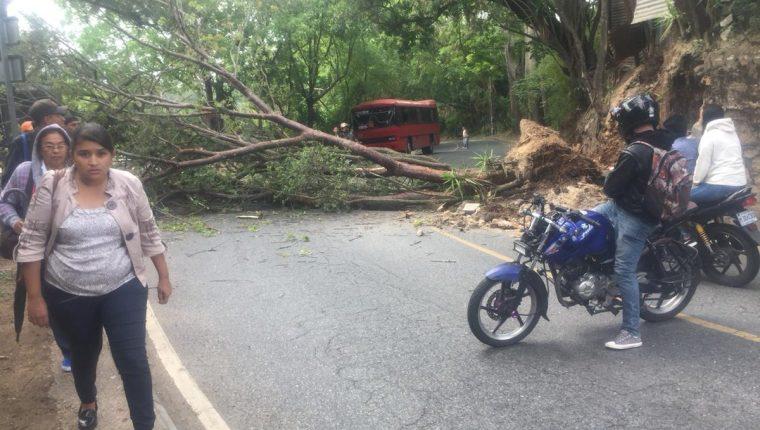 Árbol cayó en la 1 avenida y 4 calle de la colonia Santa Rosita, zona 16. (Foto Prensa Libre: Cortesía)