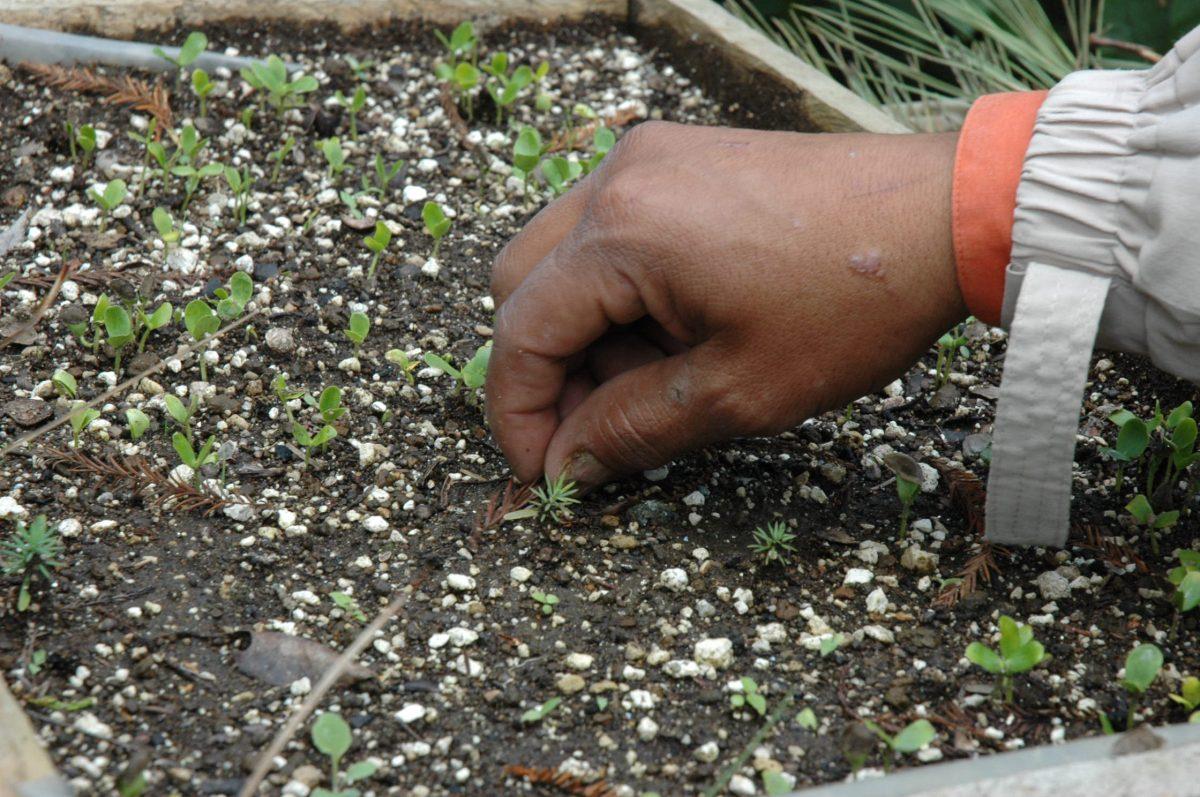 Sabía que reforestar no se trata solo de plantar un árbol, aquí algunas recomendaciones para ayudar al planeta