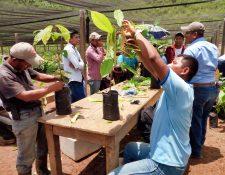 Los proyectos en agricultura han sido impulsados en varias regiones del país.(Foto Prensa Libre: cortesía Heifer)