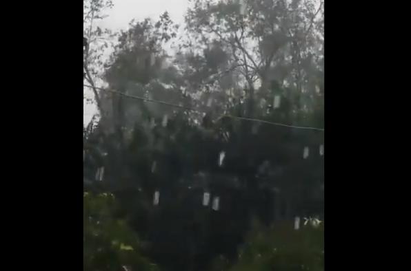 Granizo de gran tamaño cayó este viernes 10 de mayo en San Juan Chamelco y Tamahú. (Foto Prensa Libre: Tomada de video).