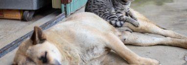 Los lapsos de tiempo en los que su mascota muda de pelo varía según su raza.  (Foto Prensa Libre: Servicios)