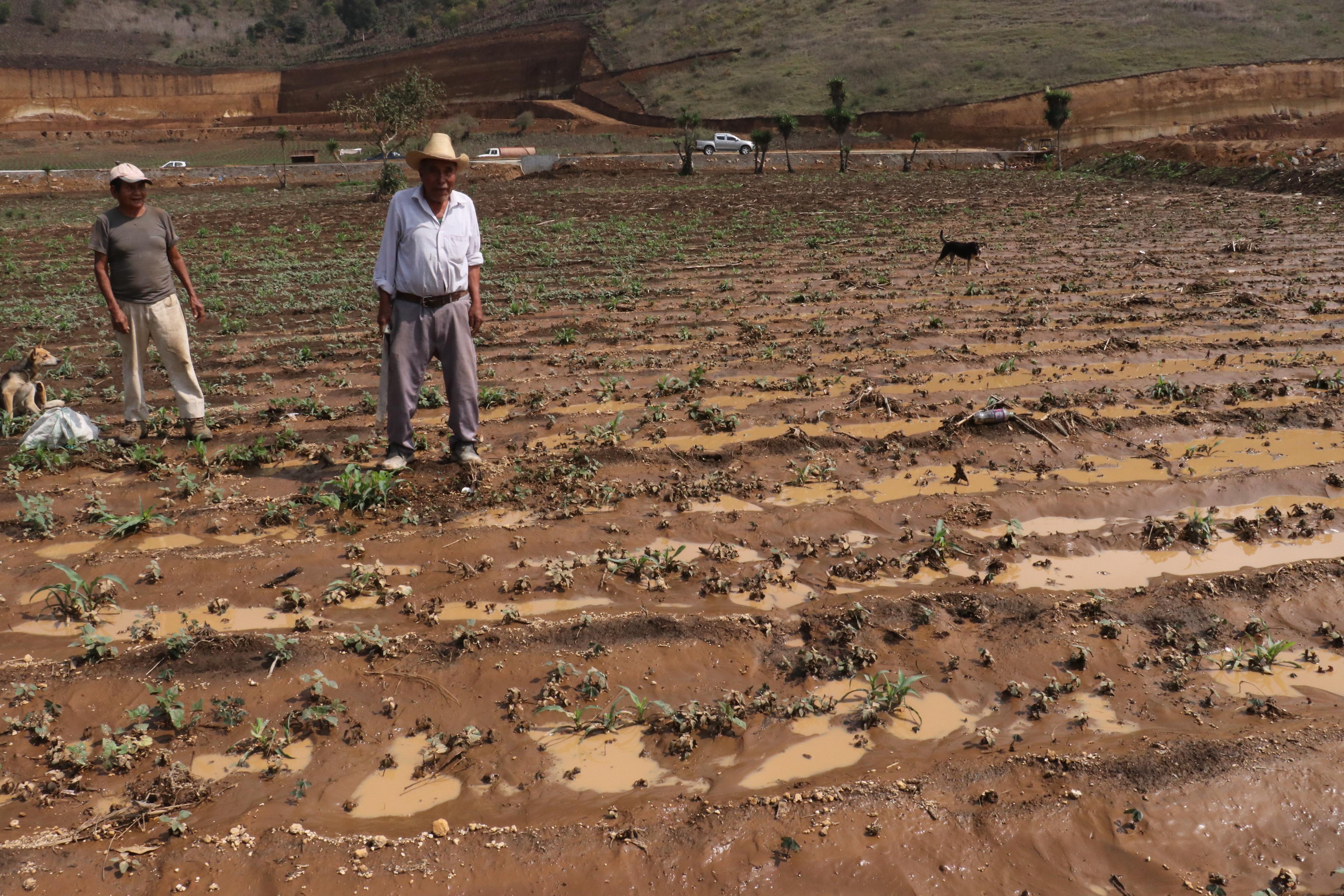Grandes extensiones de campos agrícolas fueron dañadas por el agua de lluvia que se acumuló en el Libramiento de Chimaltenango. (Foto Prensa Libre: Víctor Chamalé)