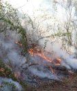 Los incendios forestales han consumido varias hectáreas de bosque en Petén. (Prensa Libre: Hemeroteca PL)