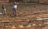 Grandes extensiones de campos agrícolas fueron dañadas por el agua de lluvia que se acumuló en el Libramiento de Chimaltenango. (Foto Prensa Libre: Víctor Chamalé) Grandes extensiones de campos agrícolas fueron dañadas por el agua de lluvia que se acumuló en el Libramiento de Chimaltenango. (Foto Prensa Libre: Víctor Chamalé)