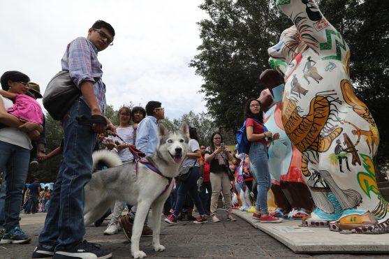 Luna, una perrita Huskie, también visitó la exposición esta sábado. Foto Prensa Libre: Óscar Rivas
