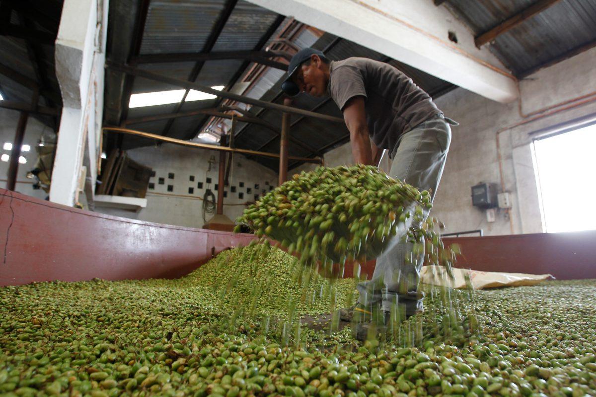 Campeones de la exportación: Los productos guatemaltecos con mejores resultados en 2019