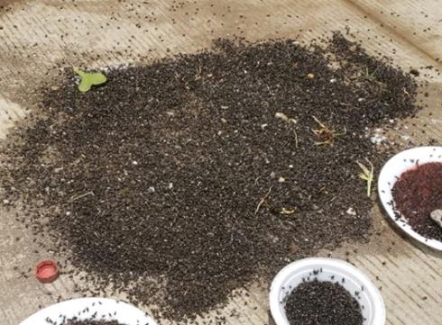 Plaga de moscas afecta a pobladores de San Francisco Zapotitlán