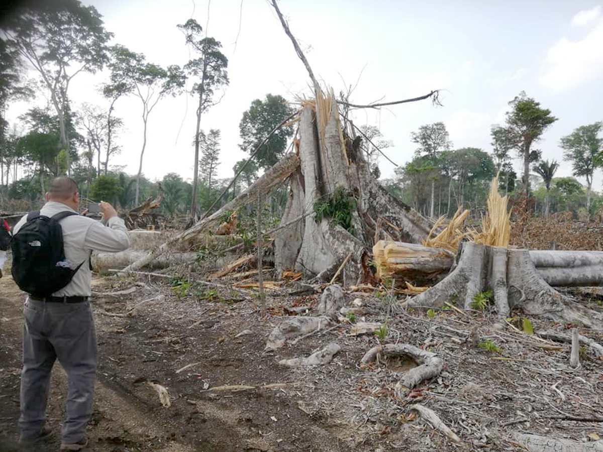 Avance de la frontera agrícola pone en riesgo al sitio arqueológico Dos Pilas