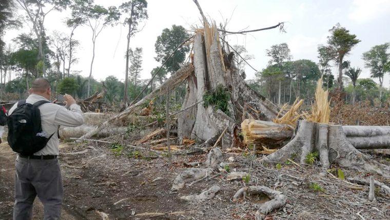 El sitio arqueológico Dos Pilas en Sayaxché, Petén, se encuentra en riesgo ante la tala ilegal, incendios forestales y el avance de la frontera agrícola. (Foto Prensa Libre: Dony Stewart)