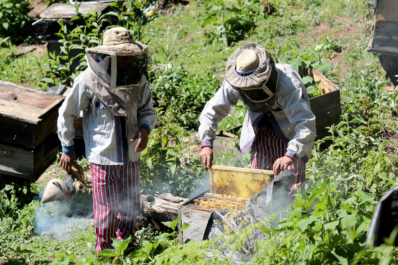 Apicultores trabajan en el cuidado de las colmenas, en Todos Santos Cuchumatán, Huehuetenango. (Foto Prensa Libre: Mike Castillo)