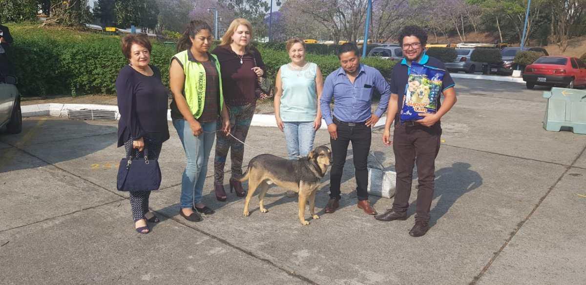 Solovino, el perro que llegó hace 5 años al Teatro Nacional, ya tiene un área especial para vivir