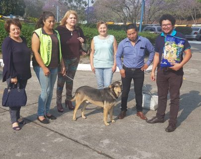 """El perro """"Solovino"""" tiene cinco años de vivir en el Centro Cultural Miguel Ángel Asturias.(Foto Prensa Libre: Cortesía)"""