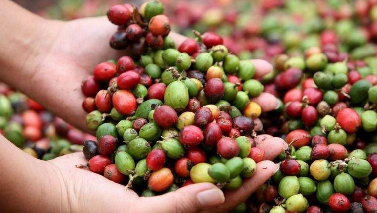 Entre los productos que Guatemala exporta a Ecuador se encuentra el café, artículos de confitería, pinturas y barnices, entre otros. (Foto Prensa Libre: Hemeroteca)