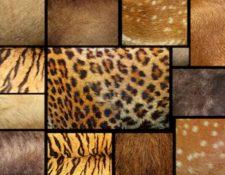 La marca de lujo italiana, Prada, dejará de emplear pieles de animales en sus productos. (Foto Prensa Libre: Servicios)